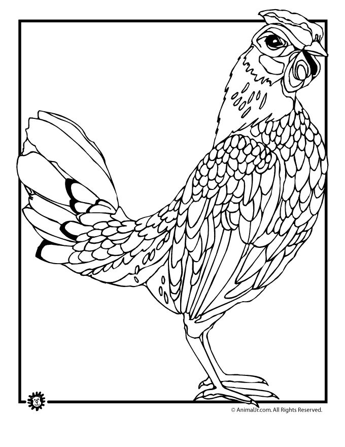 chicken coloring pages realistic chicken coloring page