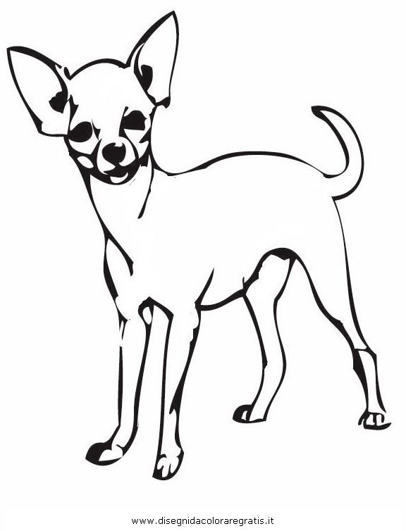 chihuahua coloring pages bing images coloring book