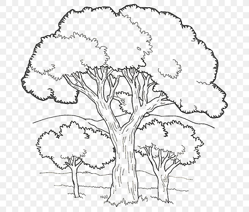coloring book colouring pages fruit tree child png