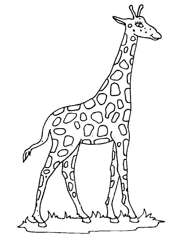 coloring page giraffe giraffe giraffe coloring pages