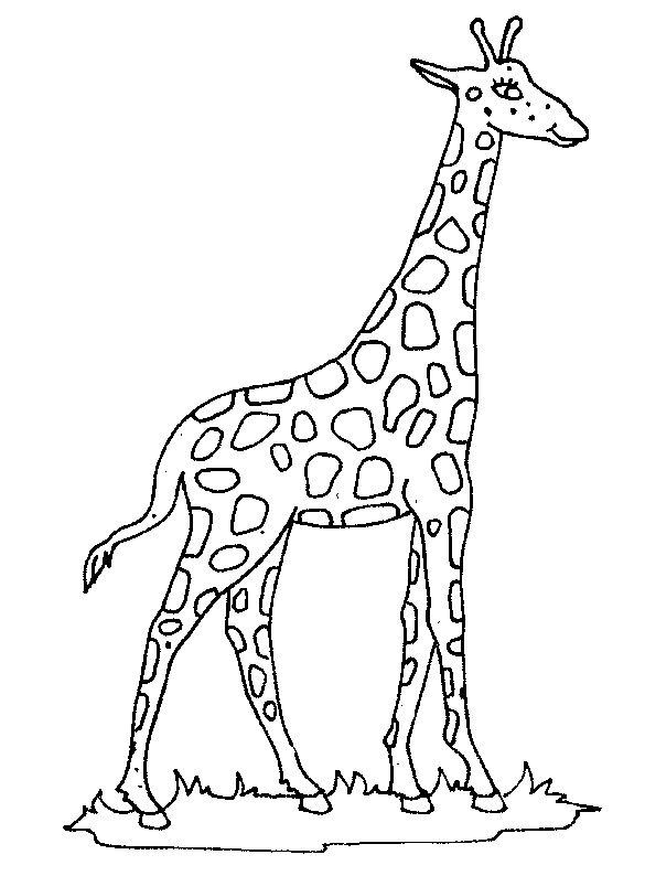 Giraffe Coloring Pages Ideas Whitesbelfast