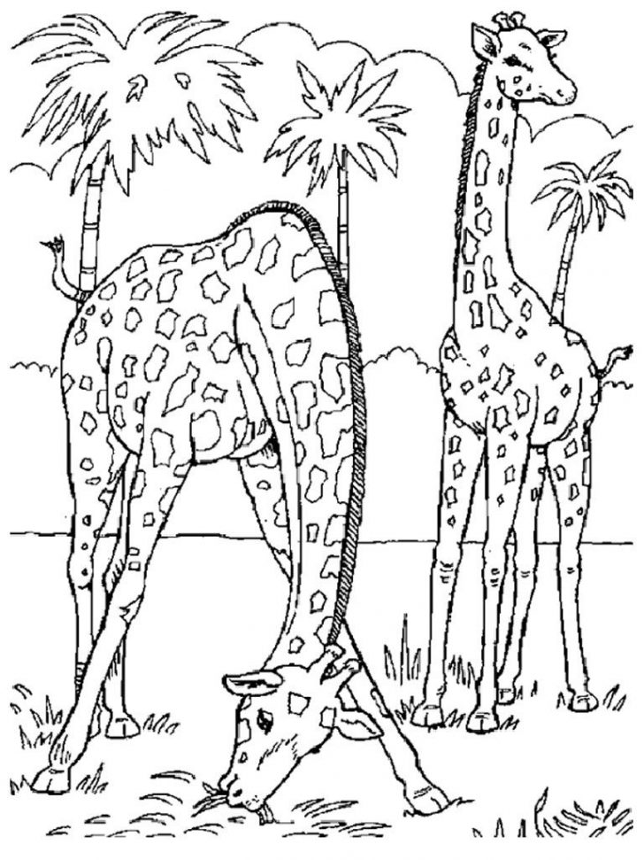 coloring pages ideas 100 remarkable realistic animal
