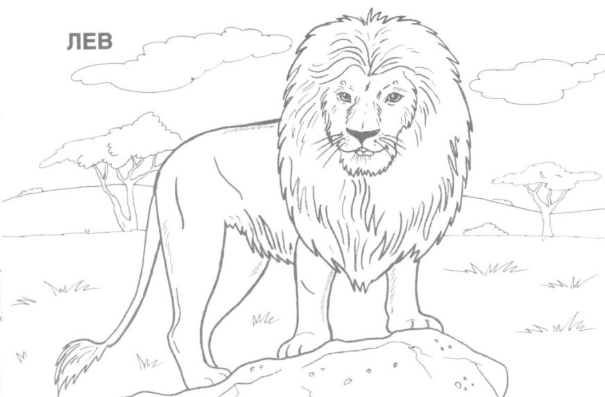 coloring pages ideas coloring pages realistic animal