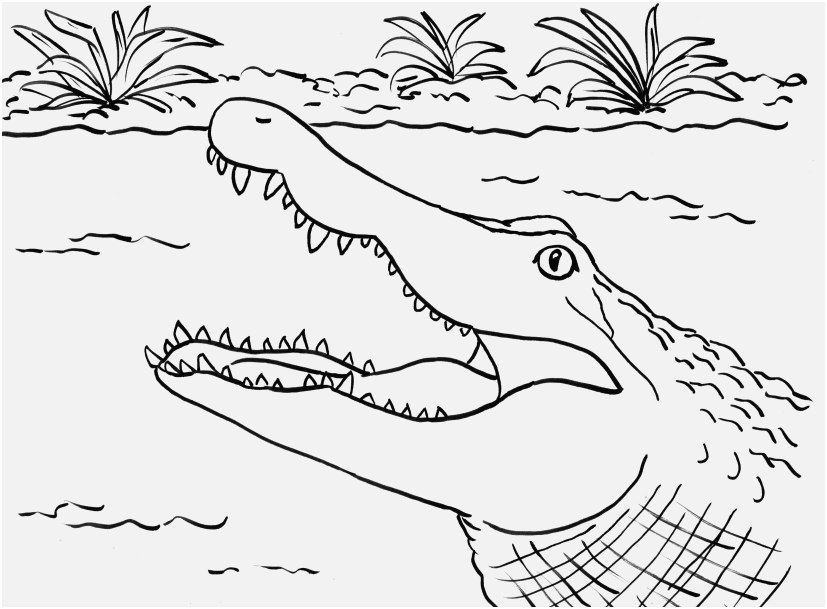coloring pages of thumbs up display alligator coloring sheet