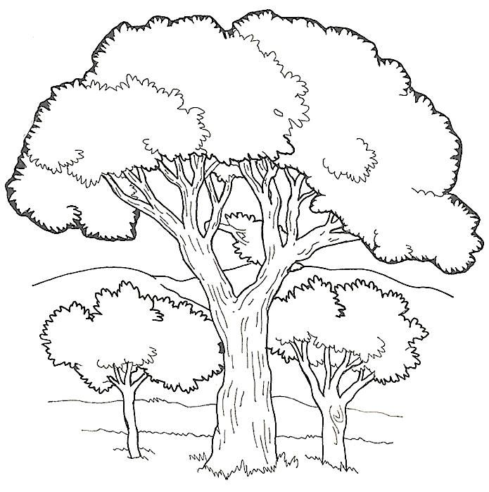 coloring pages of trees 4 lustige malvorlagen baum
