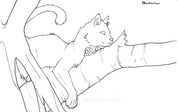 coloring pages of warrior cats at getdrawings free for