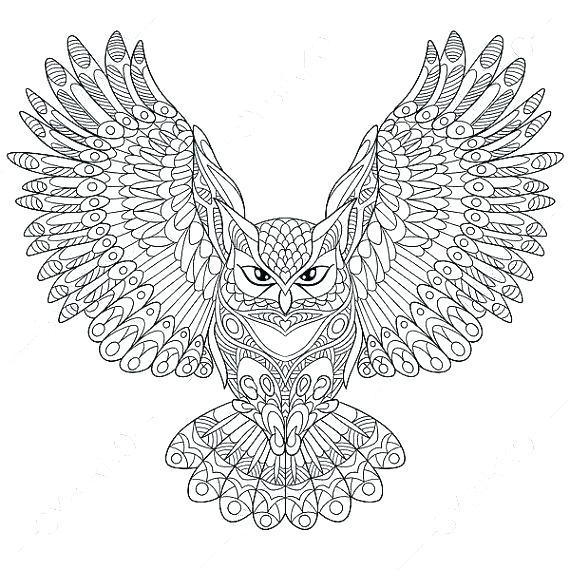 coloring pages owl noticiasdemexico