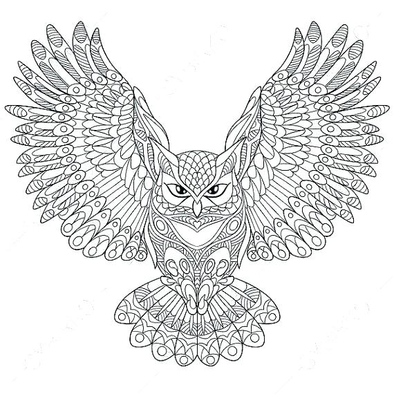 coloring pages owl noticiasdemexico