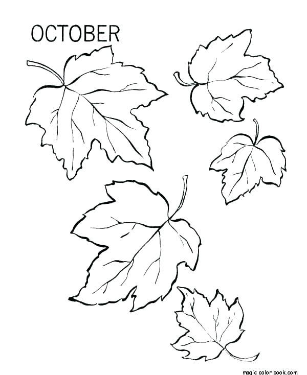 coloring picture pumpkin leaf secureapp
