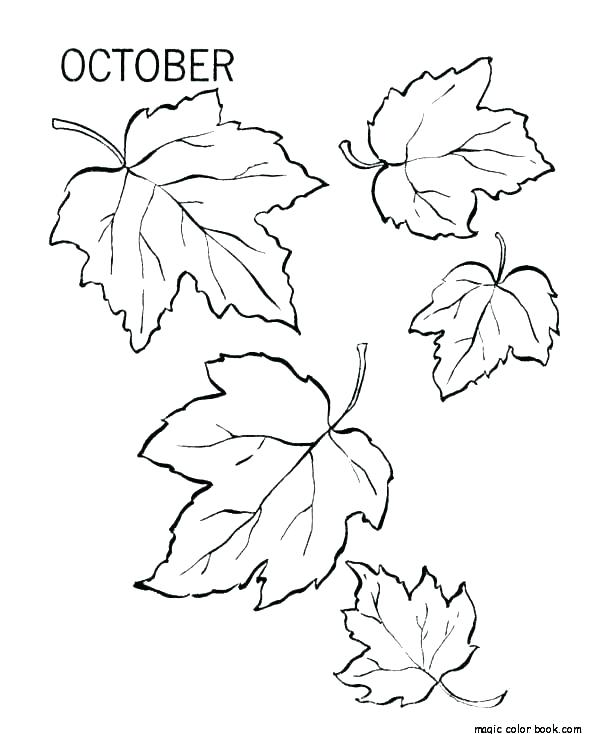 coloring picture pumpkin leaf secureapp