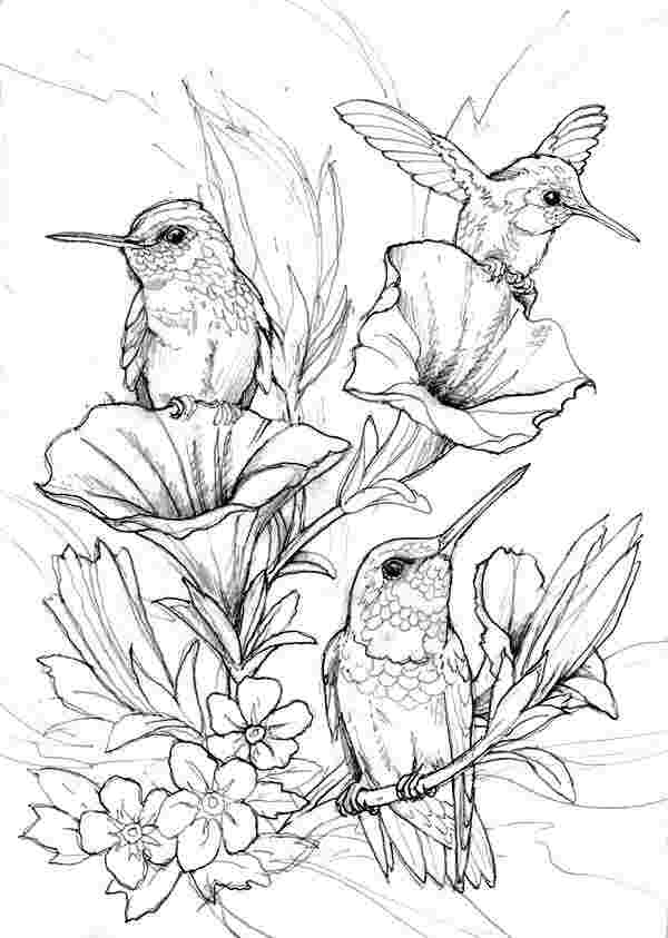 colouring pages for adults birds huangfei