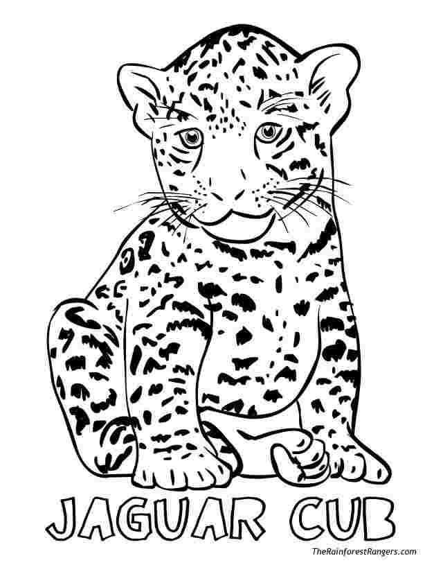 colouring pages of jaguar great jaguar coloring page free