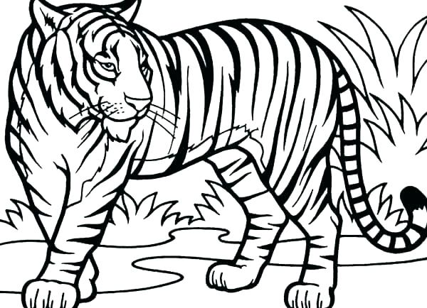 colouring pages tiger pusat hobi