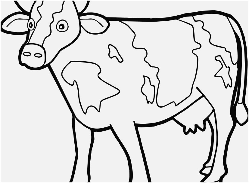 cow coloring page portraits sturdy cow colouring pages