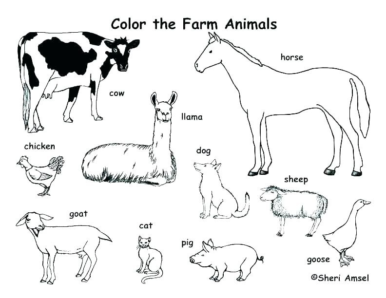 cute free coloring pages animals cs animaldoctor