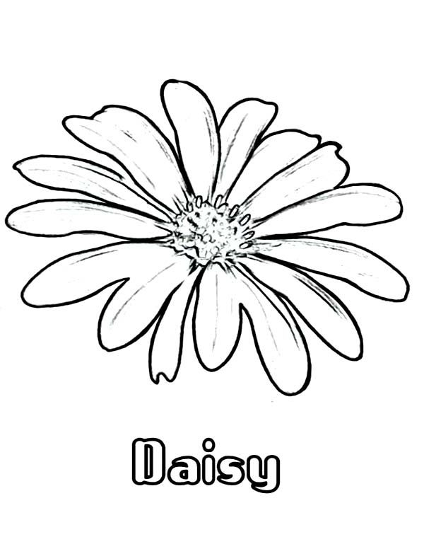 daisy flower coloring page for kids coloring pages for