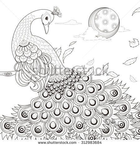 decorative peacock coloring pages google search peacock