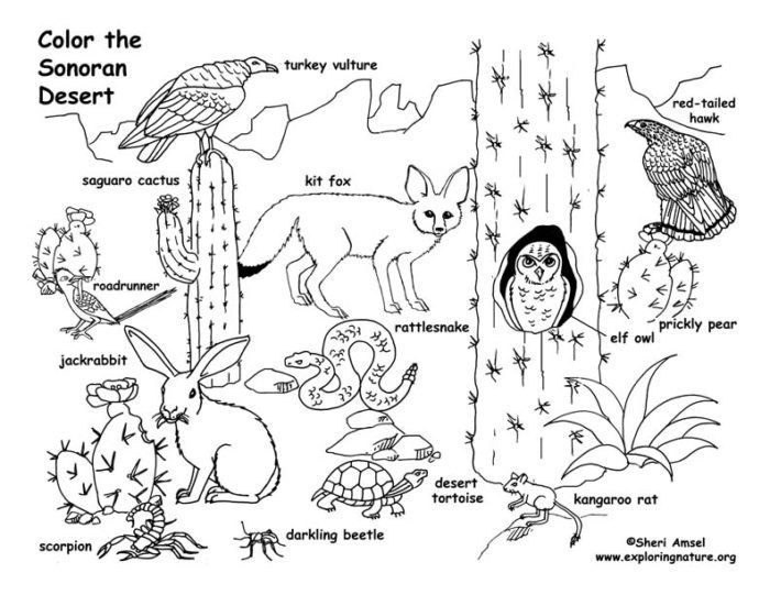 desert animal coloring pages ccoloringsheets desert