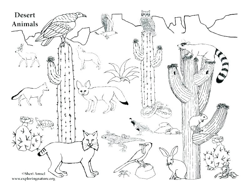 desert animals coloring pages siirthaber