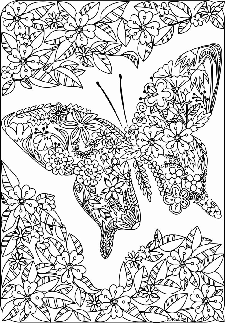detailed coloring books awesome detailed butterfly coloring