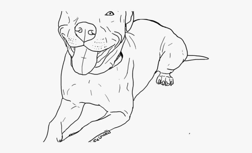 drawn pitbull cool american bully coloring pages