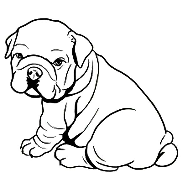 fat bulldog like towel coloring pages best place to color