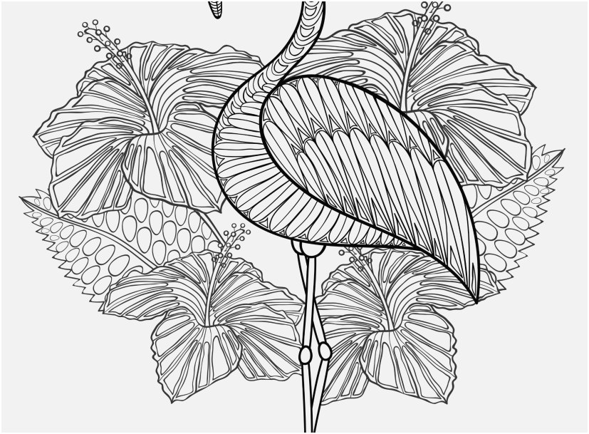 flamingo coloring pages stock cute flamingo coloring page