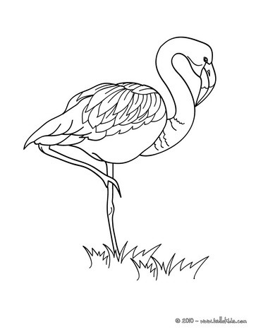 flamingo picture coloring pages hellokids