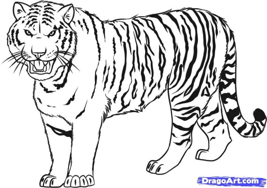 free cartoon tiger coloring pages download free clip art