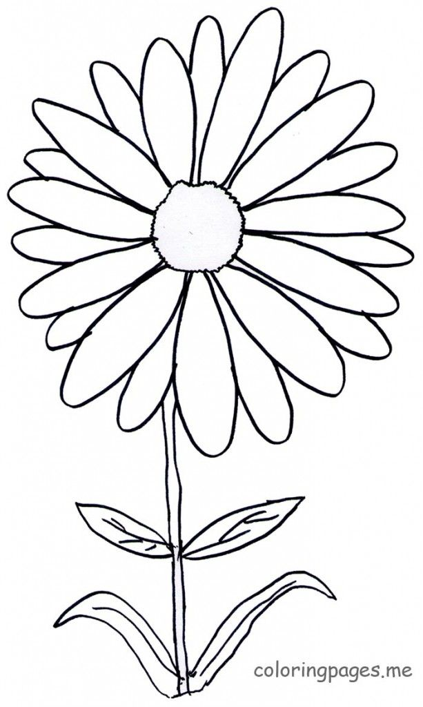 free daisy flower coloring page download free clip art