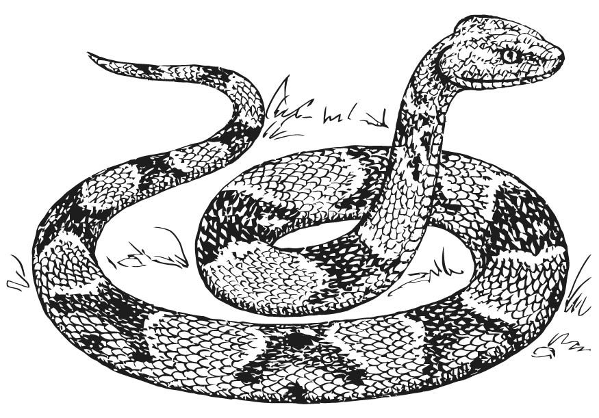 free free printable snake coloring page download free clip