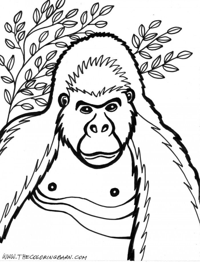 free gorilla coloring page download free clip art free
