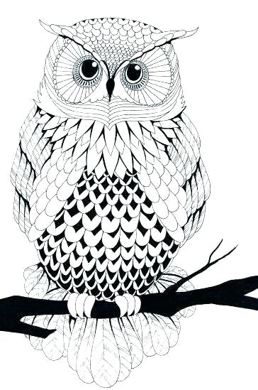 free printable coloring sheets of owls