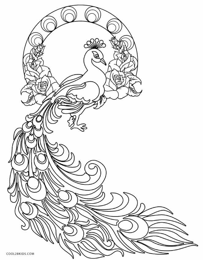 free printable peacock coloring pages for kids cool2bkids