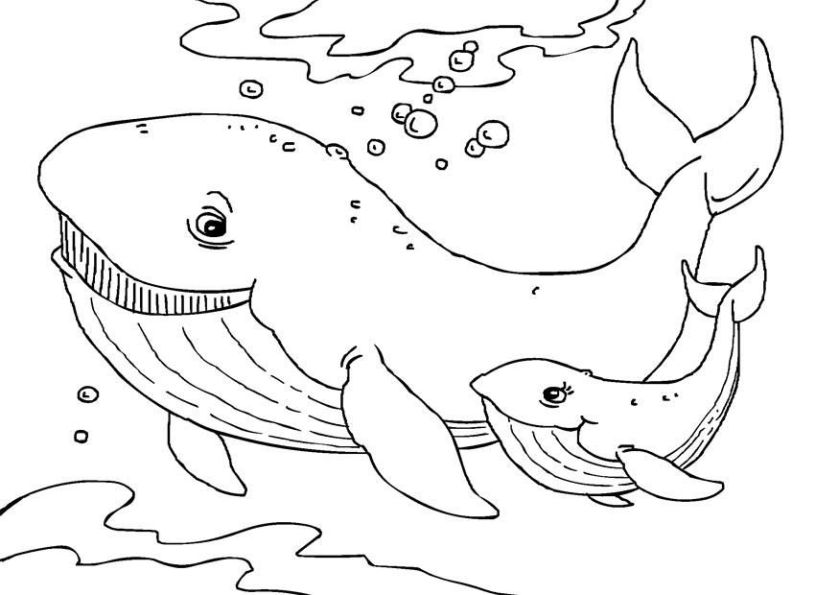 free printable whale coloring pages for kids whale