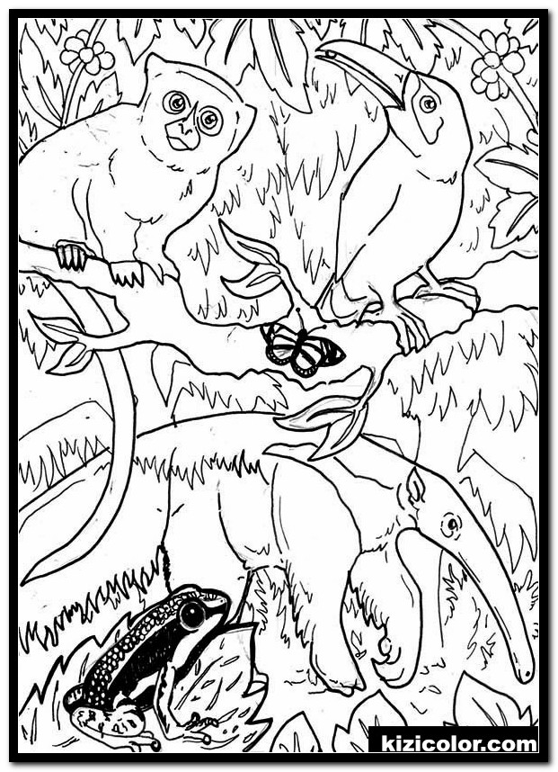 free rainforest coloring pages 1 kizi free coloring