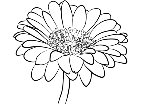 gerbera daisy coloring page free printable coloring pages