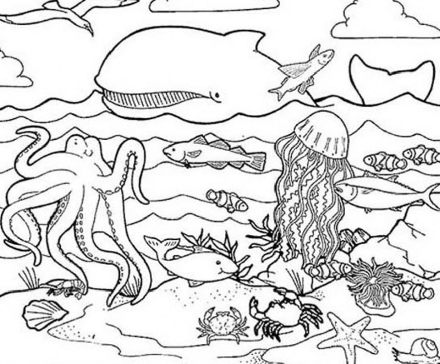 get this ocean animals coloring pages 2ah4l