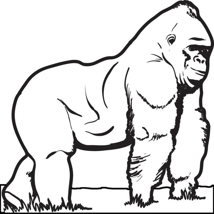 gorilla coloring page coloring pages animal coloring