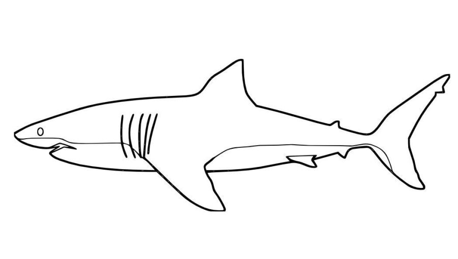 great white shark coloring page shark coloring pages