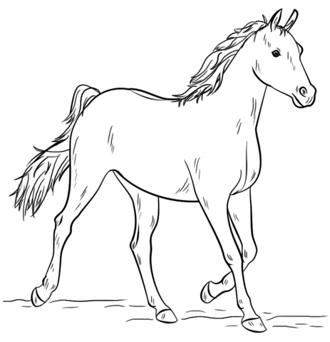 grey arabian horse coloring page free printable coloring pages