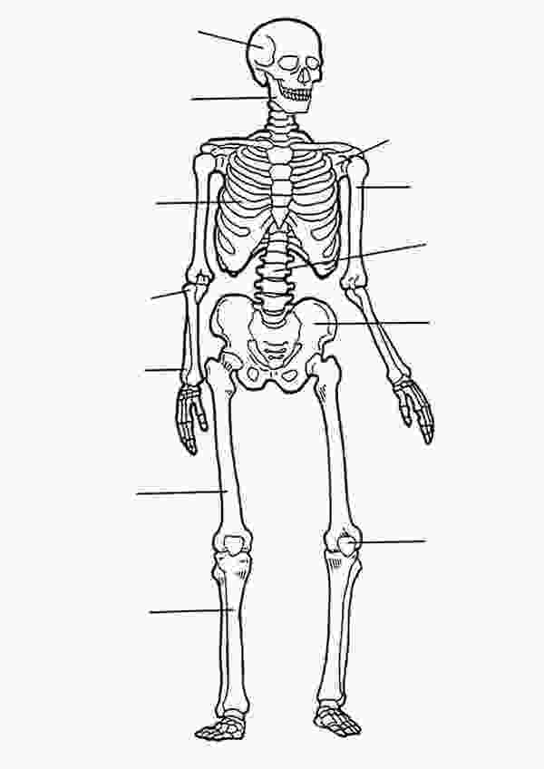 human skeleton coloring page skeletons how to draw a