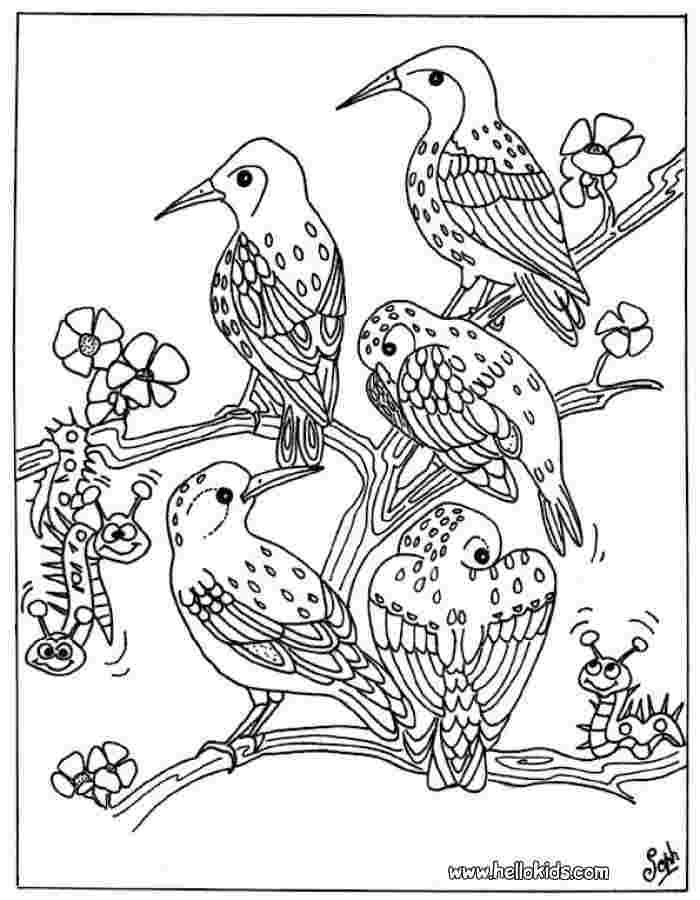 images coloring pages birds bird coloring pages 2019 best