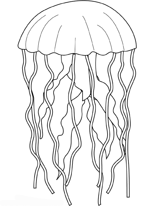 jellyfish 51 animals printable coloring pages