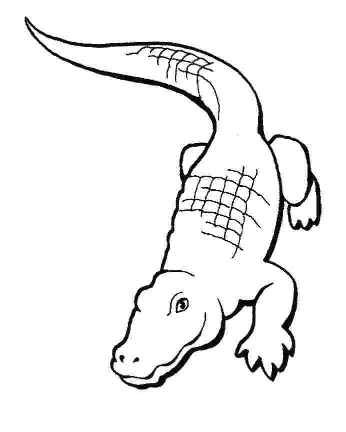just coloring cartoon crocodile coloring pages free pages