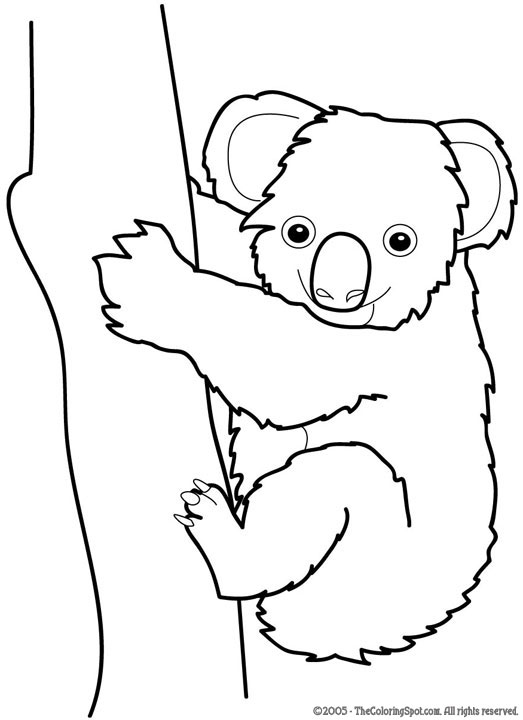 koala coloring page audio stories for kids free coloring