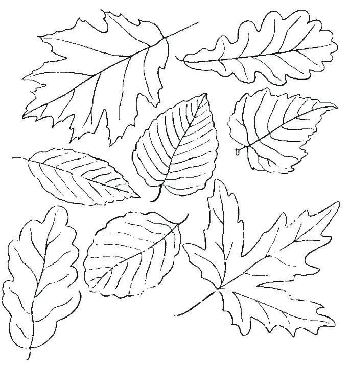 leaf coloring pages free download herbst ausmalvorlagen