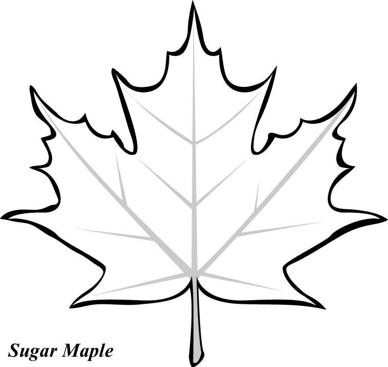 leaf printable coloring pages printables blattzeichnung