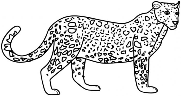 leopard coloring pages at getdrawings free for