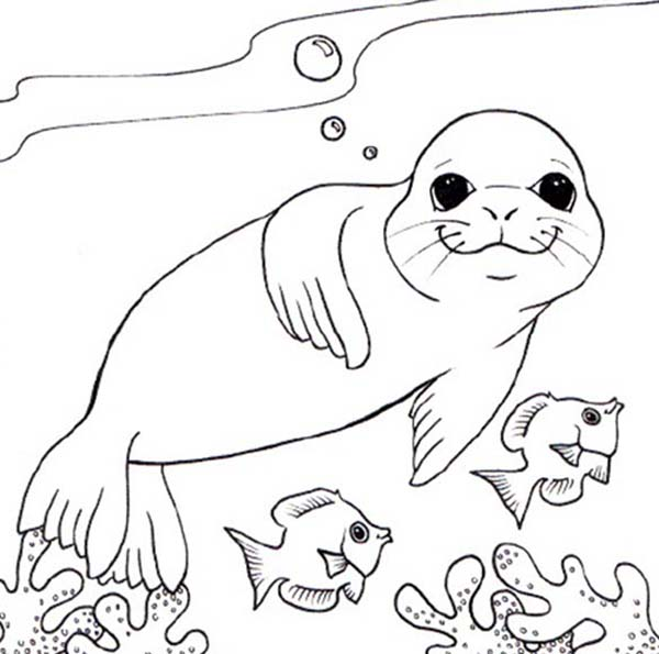 leopard seal coloring pages at getdrawings free for